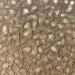 泥紋紙-粗紋